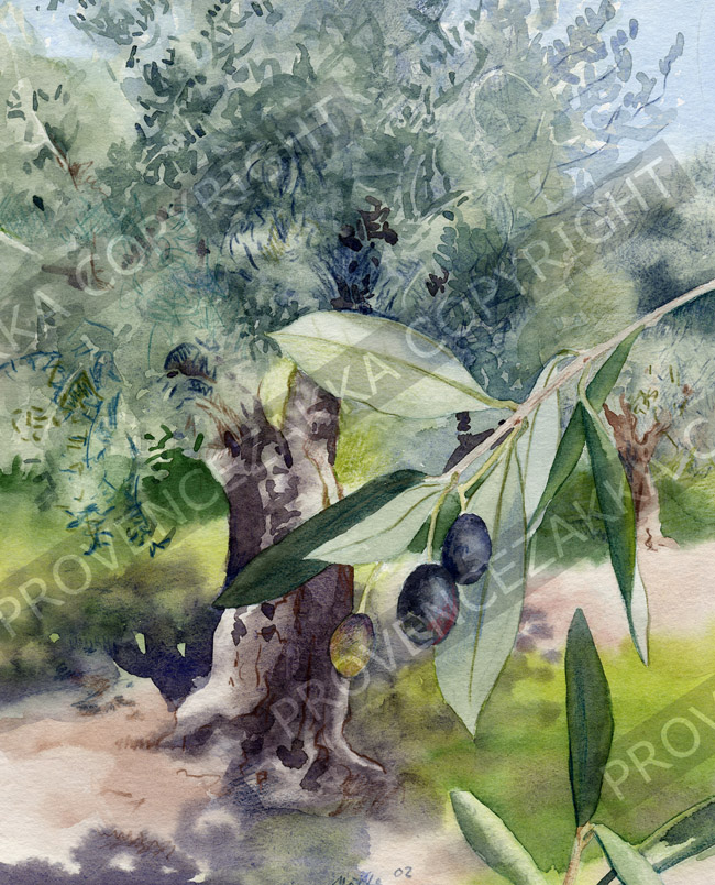 Provence olive tree, French water color painting, signed print